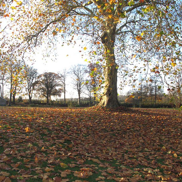 park autumn efterår tea