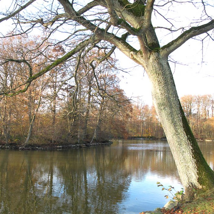 Sø flintholm mose lake