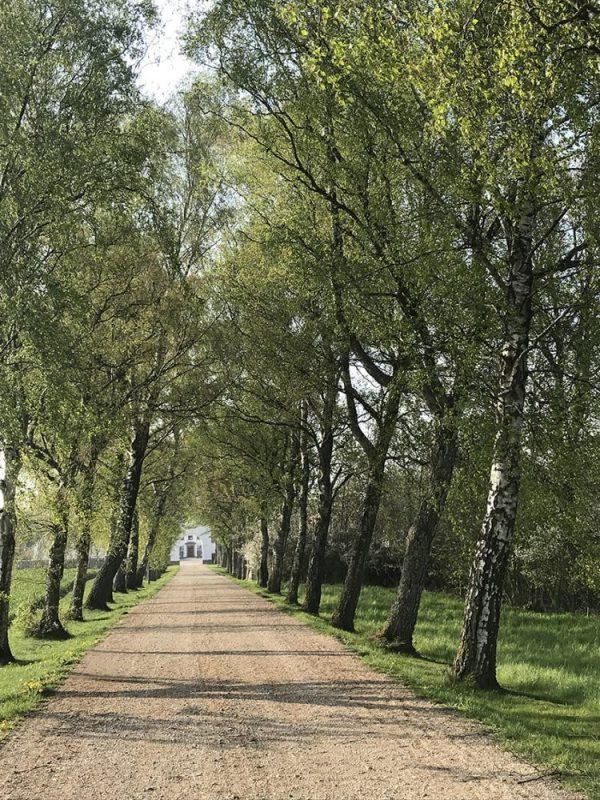 Allé, træer, trees