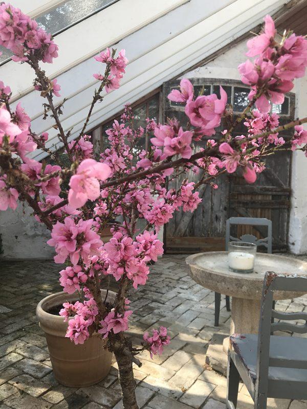 Blomster, orangeri, flowers, greenhouse