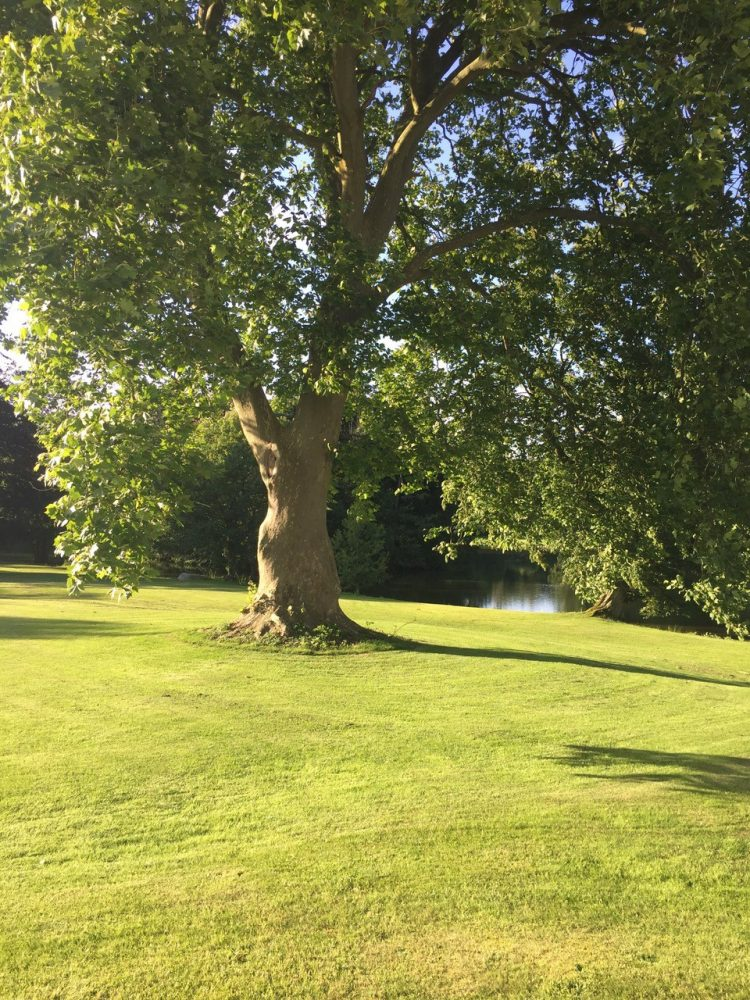 Sø, træ, plæne, park, lake, tree