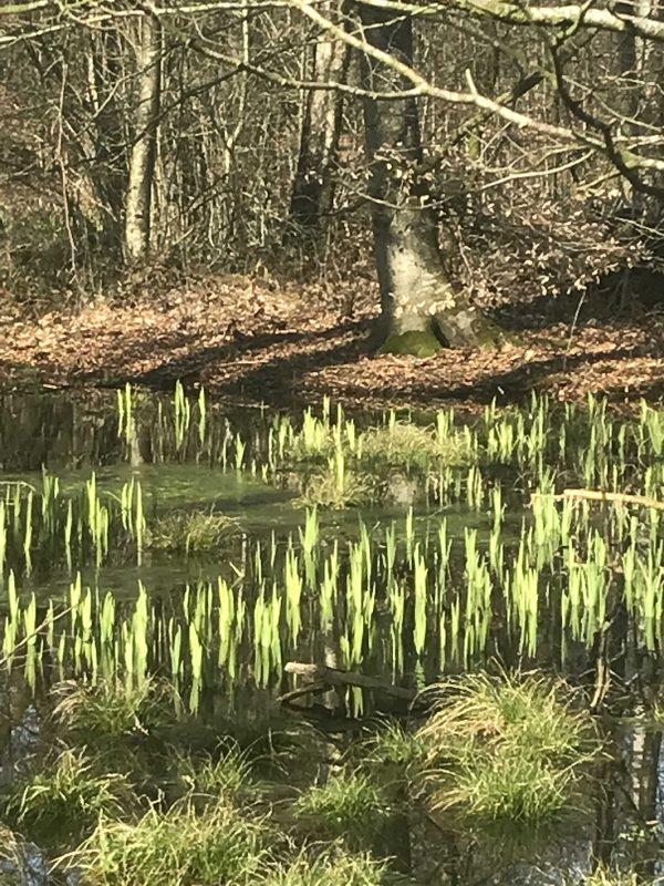 skovbund, flintholm, skov, mos, forest