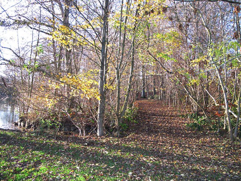 Autumn efterår skov forest idyl idyllic
