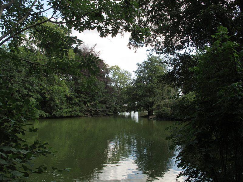 lake, sø, skov, træer, forest