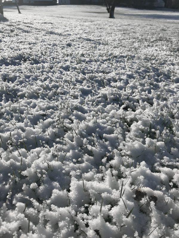 Sne, snow, lawn, park, winter, vinter, koldt, snekrystaller, crystals